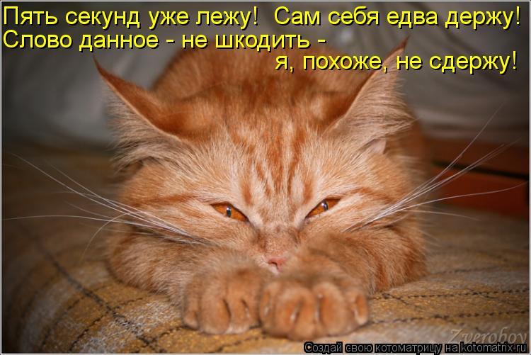 Котоматрица: Пять секунд уже лежу!  Сам себя едва держу! Слово данное - не шкодить -  я, похоже, не сдержу!