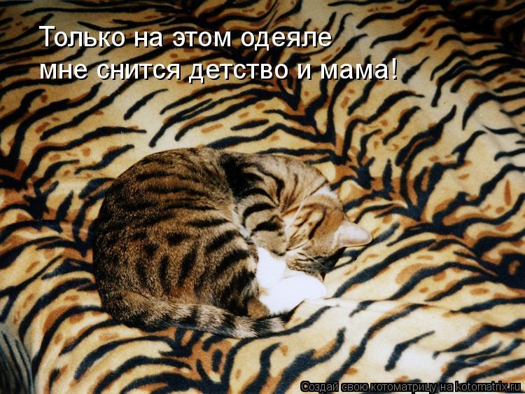 Котоматрица: Только на этом одеяле мне снится детство и мама!