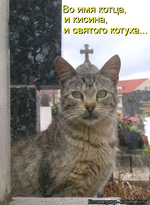 Котоматрица: и святого котуха... и кисина, Во имя котца,