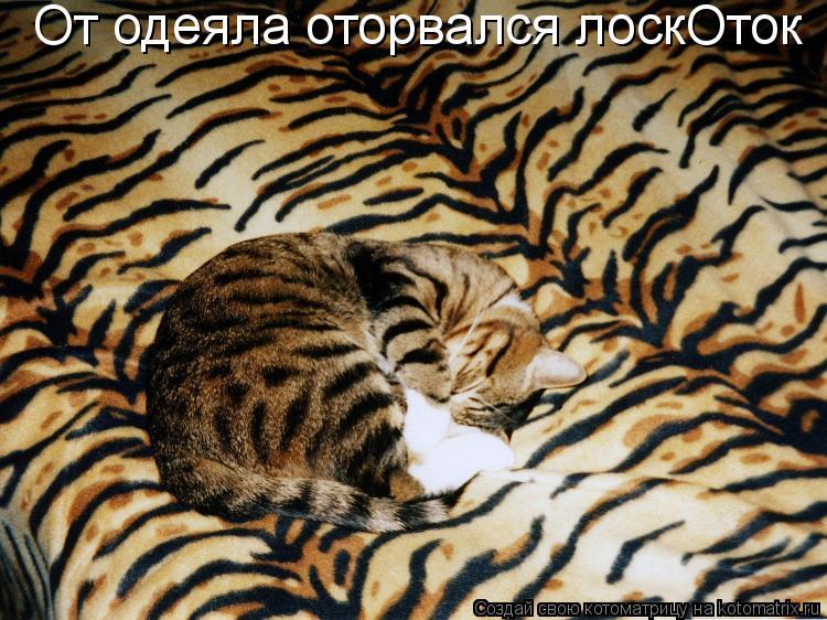 Котоматрица: От одеяла оторвался лоскОток