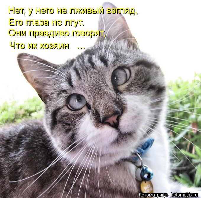 Котоматрица: Нет, у него не лживый взгляд, Его глаза не лгут. Они правдиво говорят, Что их хозяин   ...