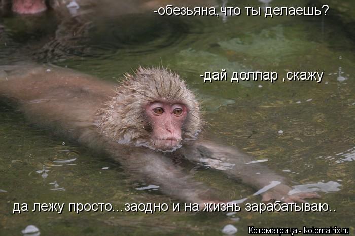 Котоматрица: -обезьяна,что ты делаешь? -дай доллар ,скажу да лежу просто...заодно и на жизнь зарабатываю..