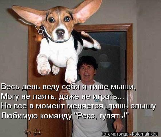 """Котоматрица: Но все в момент меняется, лишь слышу Могу не лаять, даже не играть... Весь день веду себя я тише мыши, Любимую команду """"Рекс, гулять!"""""""