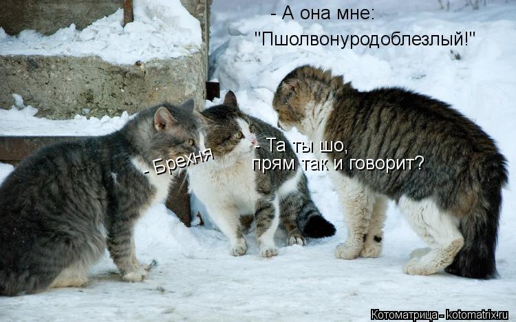 """Котоматрица: - А она мне: """"Пшолвонуродоблезлый!"""" - Та ты шо,  прям так и говорит? - Брехня"""