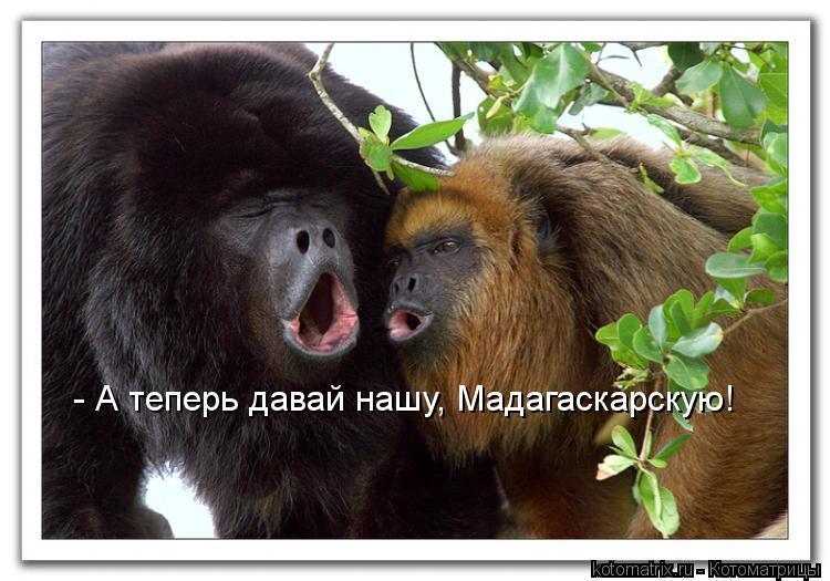 Котоматрица: - А теперь давай нашу, Мадагаскарскую!
