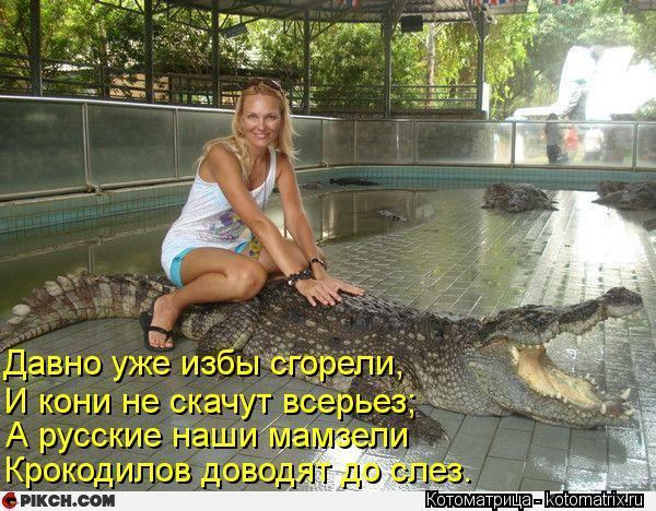 Котоматрица: Давно уже избы сгорели, И кони не скачут всерьез; А русские наши мамзели Крокодилов доводят до слез.