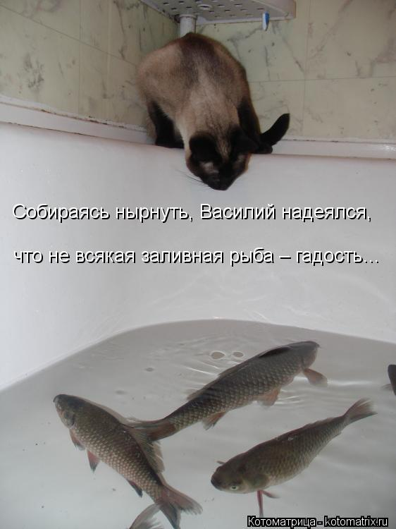 Котоматрица: Собираясь нырнуть, Василий надеялся, что не всякая заливная рыба – гадость…