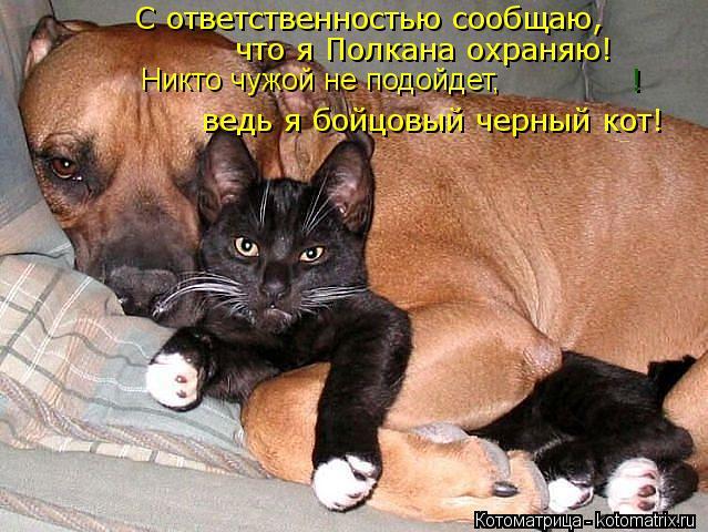 Котоматрица: ! С ответственностью сообщаю, что я Полкана охраняю! ведь я бойцовый черный кот! Никто чужой не подойдет,