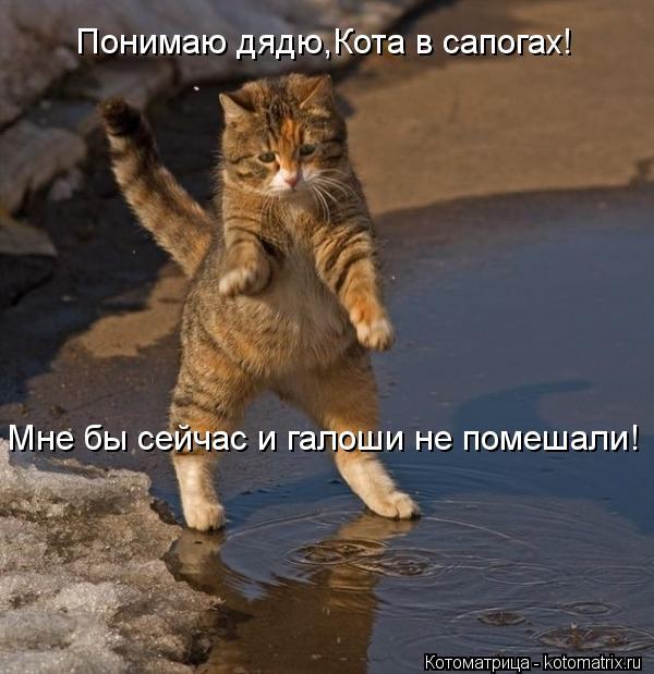 Котоматрица: Понимаю дядю,Кота в сапогах! Мне бы сейчас и галоши не помешали!