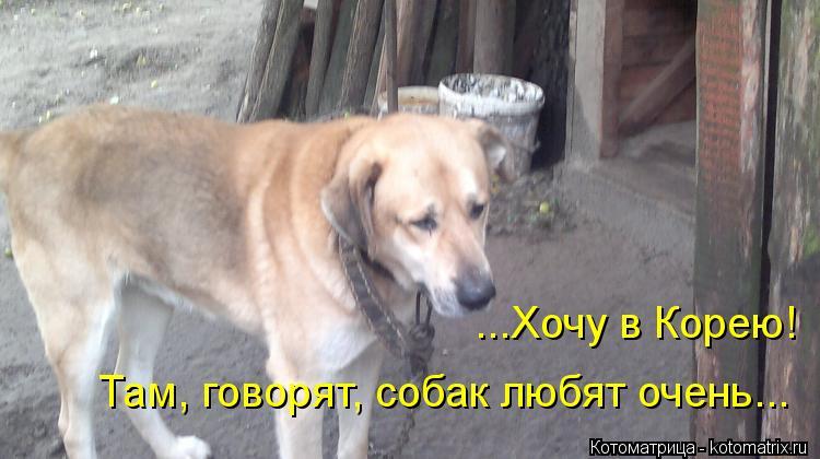 Котоматрица: ...Хочу в Корею! Там, говорят, собак любят очень...