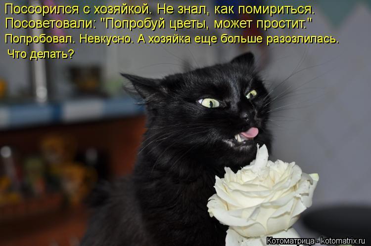 """Котоматрица: Поссорился с хозяйкой. Не знал, как помириться. Посоветовали: """"Попробуй цветы, может простит."""" Попробовал. Невкусно. А хозяйка еще больше раз"""