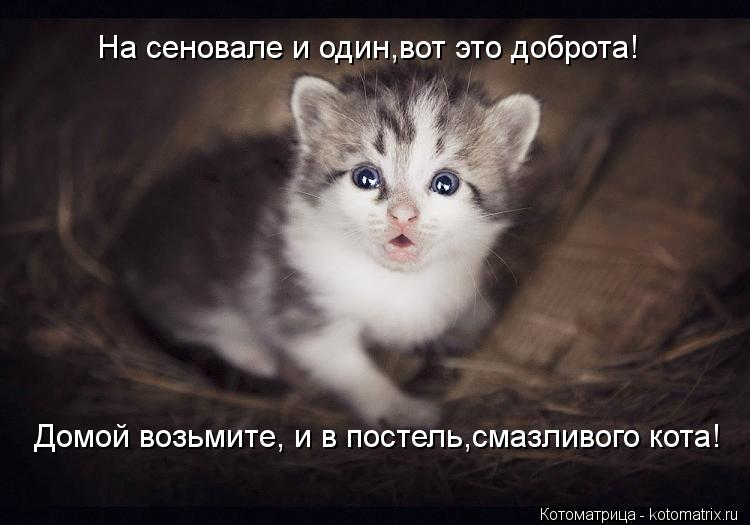 Котоматрица: На сеновале и один,вот это доброта! Домой возьмите, и в постель,смазливого кота!