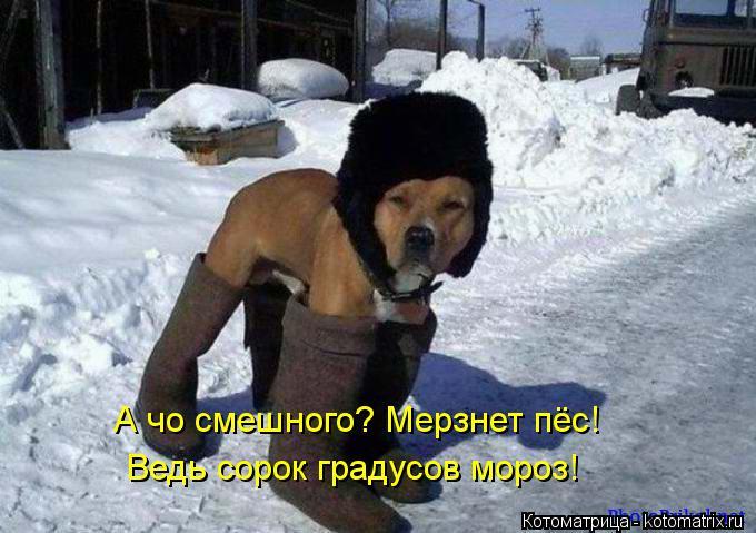 Котоматрица: А чо смешного? Мерзнет пёс! Ведь сорок градусов мороз!