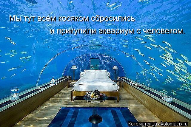 Котоматрица: Мы тут всем косяком сбросились и прикупили аквариум с человеком.
