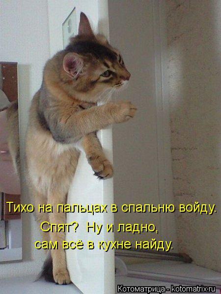 Котоматрица: Спят?  Ну и ладно,  Тихо на пальцах в спальню войду. сам всё в кухне найду.