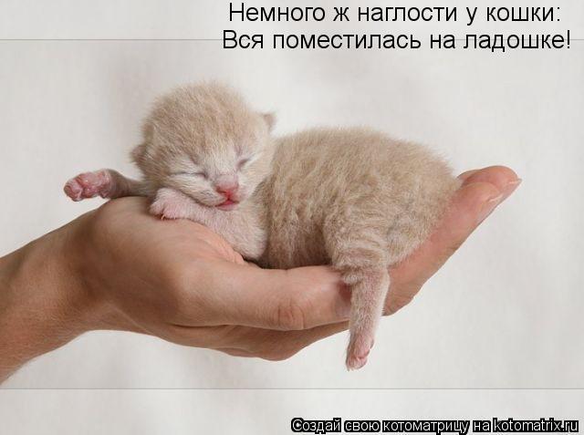 Котоматрица: Немного ж наглости у кошки: Вся поместилась на ладошке!