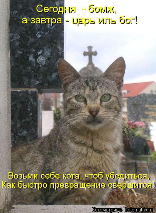 Котоматрица: Сегодня  - бомж,  а завтра - царь иль бог! Возьми себе кота, чтоб убедиться, Как быстро превращение свершится!