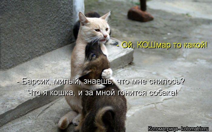 Котоматрица: - Барсик, милый, знаешь, что мне снилось? Что я кошка, и за мной гонится собака! - Ой, КОШмар то какой!