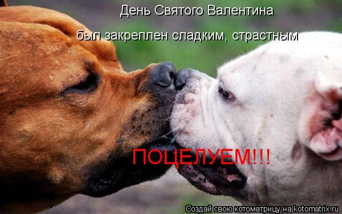 Котоматрица: День Святого Валентина был закреплен сладким, страстным ПОЦЕЛУЕМ!!!