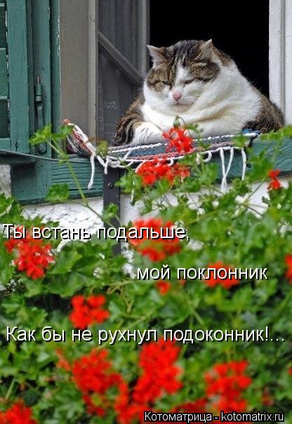 Котоматрица: Ты встань подальше, мой поклонник! Ты встань подальше, мой поклонник Как бы не рухнул подоконник!...