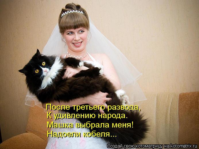 Котоматрица: После третьего развода, К удивлению народа. Машка выбрала меня! Надоели кобеля...
