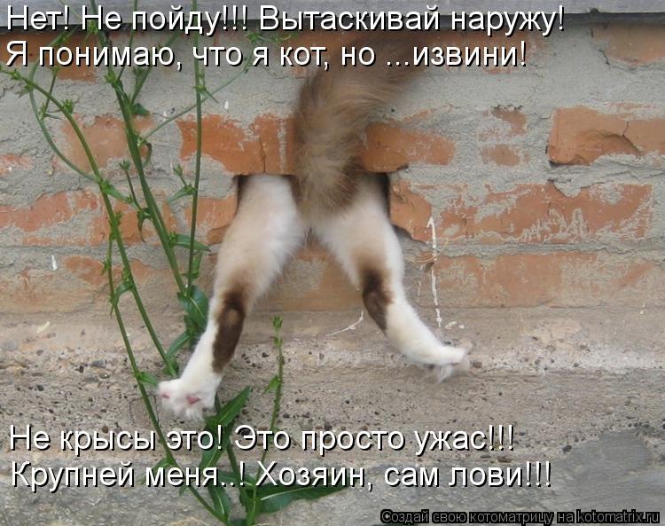 Котоматрица: Нет! Не пойду!!! Вытаскивай наружу! Я понимаю, что я кот, но ...извини! Не крысы это! Это просто ужас!!! Крупней меня..! Хозяин, сам лови!!!