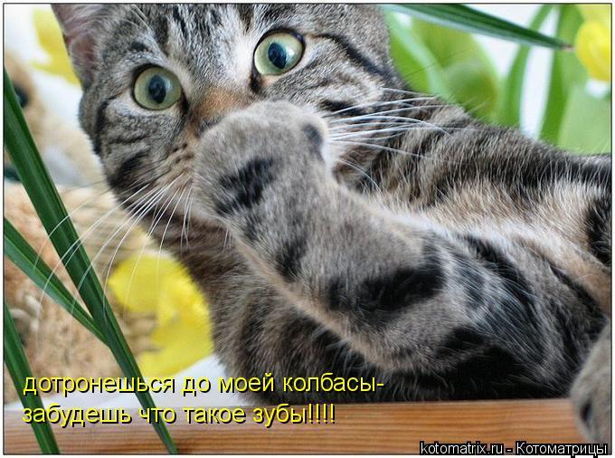 Котоматрица: дотронешься до моей колбасы- забудешь что такое зубы!!!!