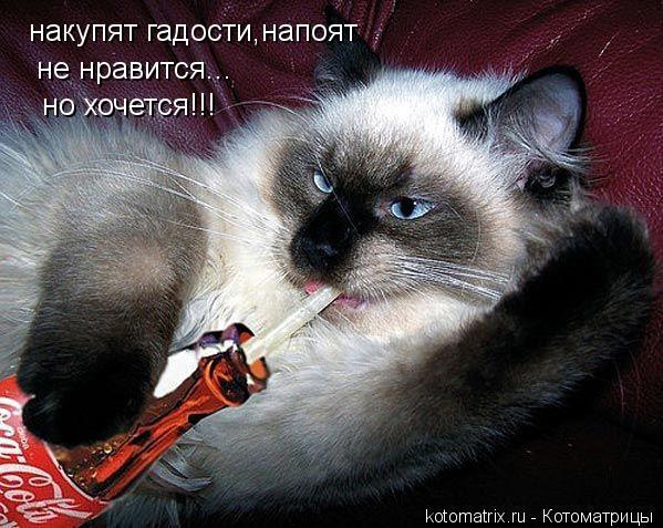 Котоматрица: накупят гадости,напоят не нравится... но хочется!!!