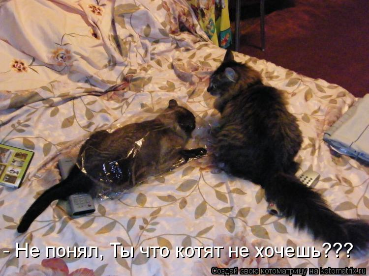 Котоматрица: - Не понял, Ты что котят не хочешь???