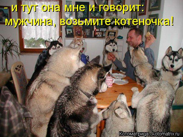 Котоматрица: - и тут она мне и говорит:  мужчина, возьмите котеночка!