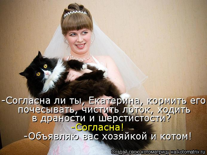 Котоматрица: -Согласна ли ты, Екатерина, кормить его почесывать, чистить лоток, ходить  в драности и шерстистости? -Согласна! -Объявляю вас хозяйкой и кото