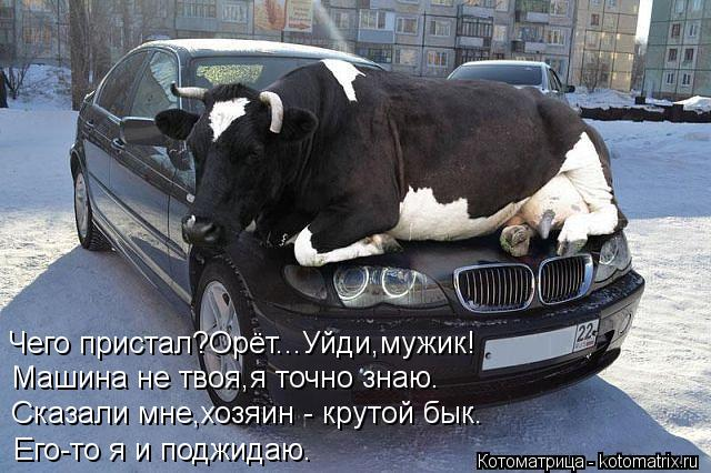 Котоматрица: Чего пристал?Орёт...Уйди,мужик! Машина не твоя,я точно знаю. Сказали мне,хозяин - крутой бык. Его-то я и поджидаю.