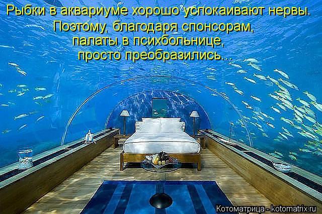 Котоматрица: Рыбки в аквариуме хорошо успокаивают нервы. Поэтому, благодаря спонсорам,  палаты в психбольнице, просто преобразились...