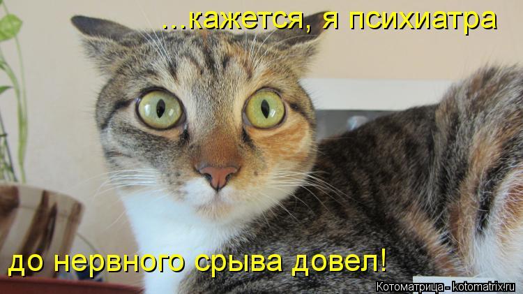 Котоматрица: ...кажется, я психиатра  до нервного срыва довел!