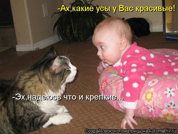 Котоматрица: -Ах,какие усы у Вас красивые! -Эх,надеюсь что и крепкие...
