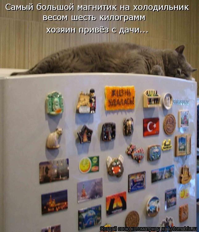 Котоматрица: Самый большой магнитик на холодильник весом шесть килограмм хозяин привёз с дачи...