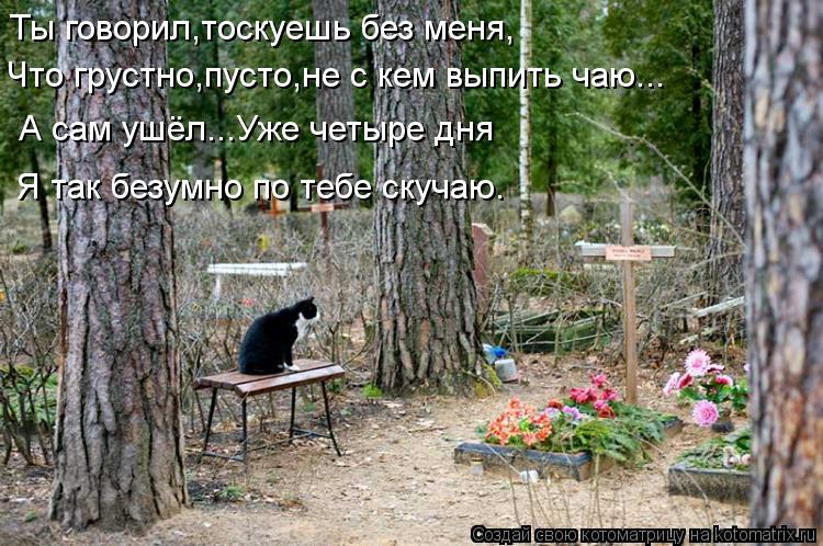Котоматрица: Ты говорил,тоскуешь без меня, Что грустно,пусто,не с кем выпить чаю... А сам ушёл...Уже четыре дня Я так безумно по тебе скучаю.