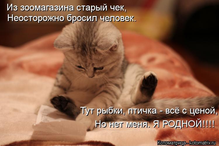 Котоматрица: Из зоомагазина старый чек, Неосторожно бросил человек. Тут рыбки, птичка - всё с ценой, Но нет меня. Я РОДНОЙ!!!!