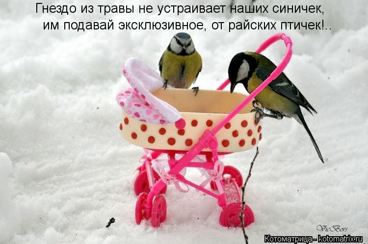 Котоматрица: Гнездо из травы не устраивает наших синичек, им подавай эксклюзивное, от райских птичек!..