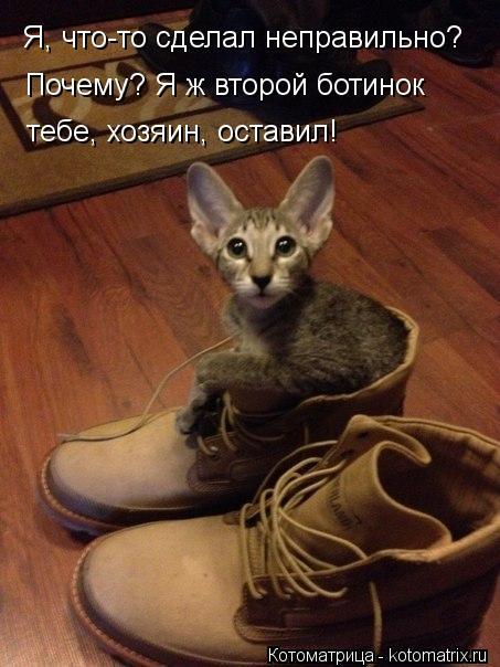 Котоматрица: Я, что-то сделал неправильно? Почему? Я ж второй ботинок тебе, хозяин, оставил!