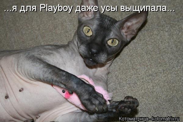 Котоматрица: ...я для Playboy даже усы выщипала...