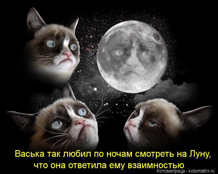 Котоматрица: Васька так любил по ночам смотреть на Луну, что она ответила ему взаимностью