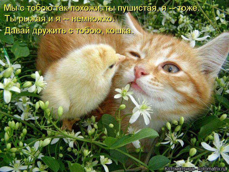 Котоматрица: Мы с тобою так похожи: ты пушистая, я -- тоже. Ты рыжая и я -- немножко. Давай дружить с тобою, кошка.