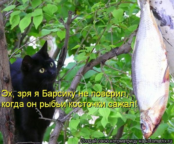 Котоматрица: когда он рыбьи косточки сажал! Эх, зря я Барсику не поверил, Эх, зря я Барсику не поверил,