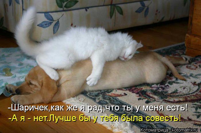 Котоматрица: -Шаричек,как же я рад,что ты у меня есть! -А я - нет.Лучше бы у тебя была совесть!