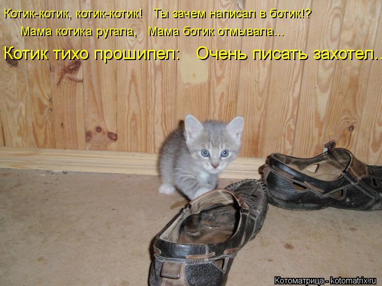 мой котик котик котик песня видео очень удивилась