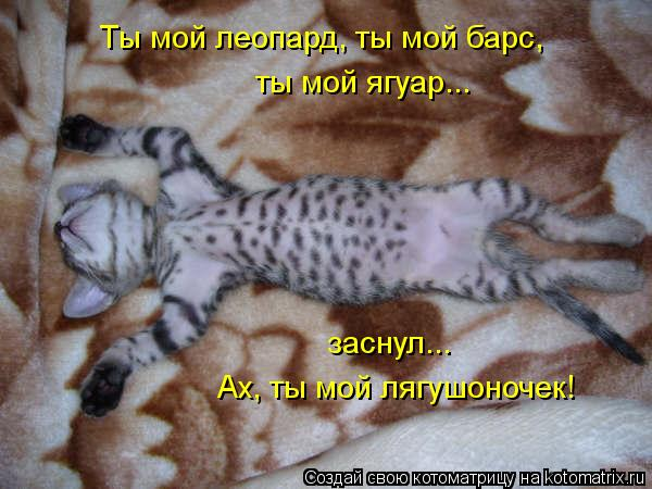 Котоматрица: Ты мой леопард, ты мой барс, ты мой ягуар... заснул... Ах, ты мой лягушоночек!