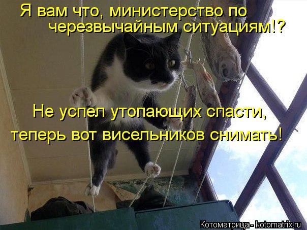 Котоматрица: Не успел утопающих спасти, теперь вот висельников снимать! Я вам что, министерство по черезвычайным ситуациям!?