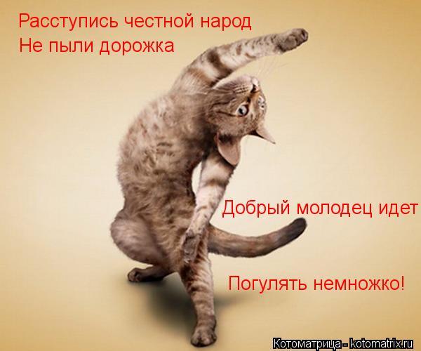 Котоматрица: Расступись честной народ Не пыли дорожка Добрый молодец идет Погулять немножко!