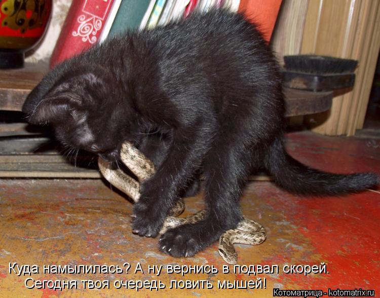 Котоматрица: Куда намылилась? А ну вернись в подвал скорей. Сегодня твоя очередь ловить мышей!